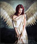 Angelus Pennae