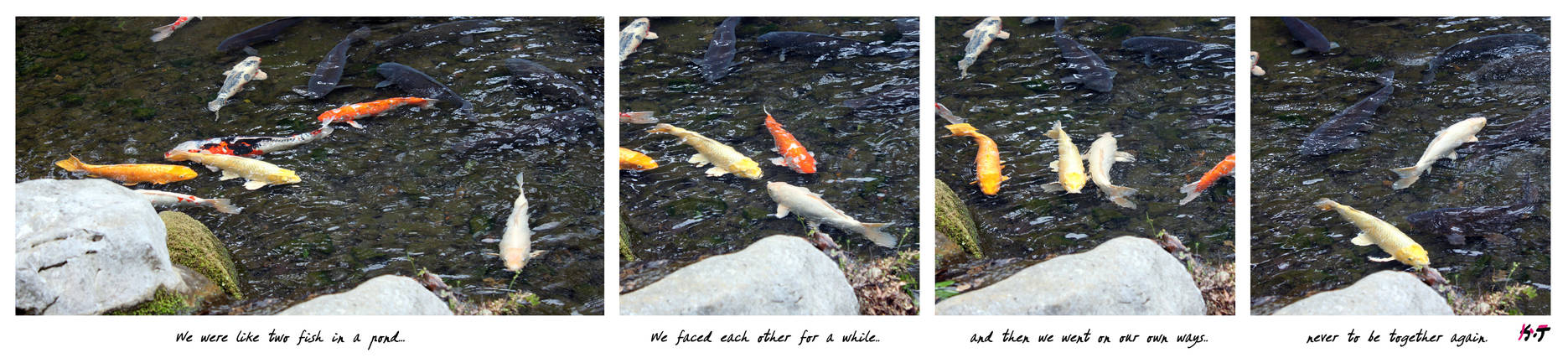 Just two fish in the pond
