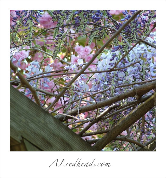 Thinking Spring- Resubmitted by Alredhead
