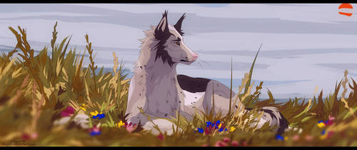 field by dinychh