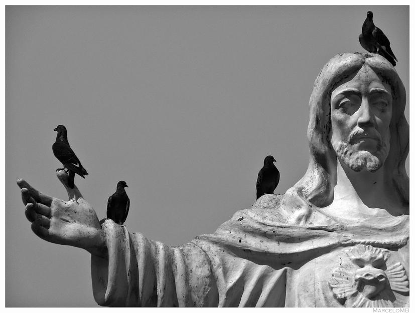 Pigeons Of Christ
