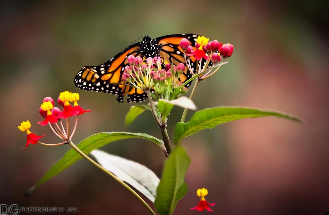 IMAGE: http://th09.deviantart.net/fs70/PRE/i/2012/073/3/9/butterfly_3_by_dgphotographyjax-d4ssmt8.jpg