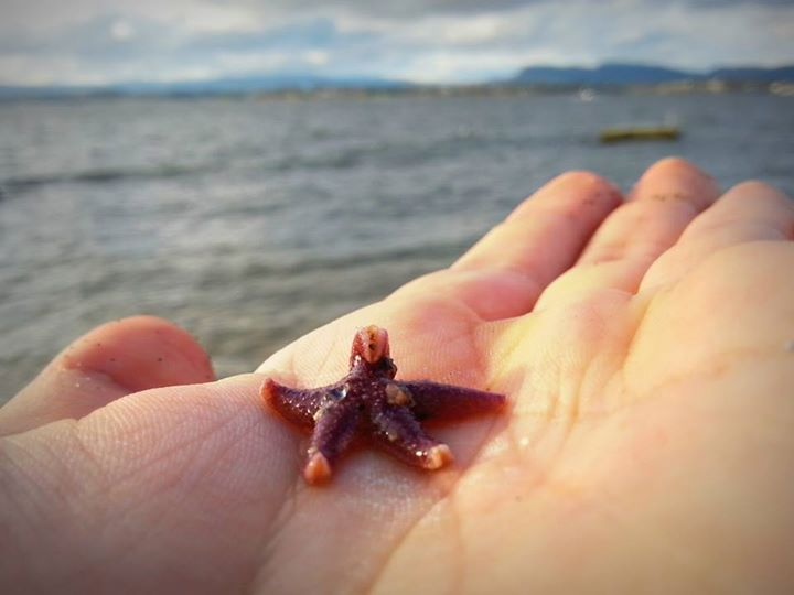 Little Starfish by BeatStoker