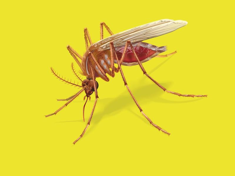 Mosquito by GruberJan
