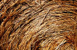 close-up of a hay bail by Carolinel3