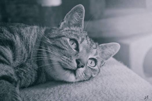 Dreams of a cat