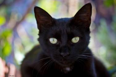 Greeneyes Cat by KrisSimon