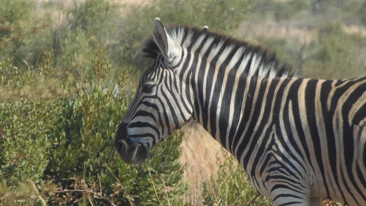 Black w/ White Stripes by RainbowCloudArt