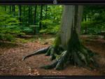 Big Roots by stockkj