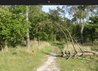 Forest Trail 3 by stockkj