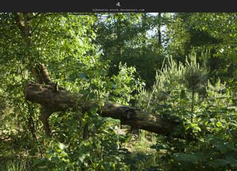 Fallen Tree by stockkj