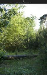 Fairy Land by stockkj