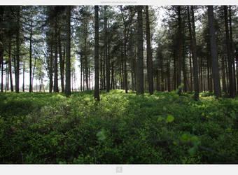 Kampina Forest by stockkj