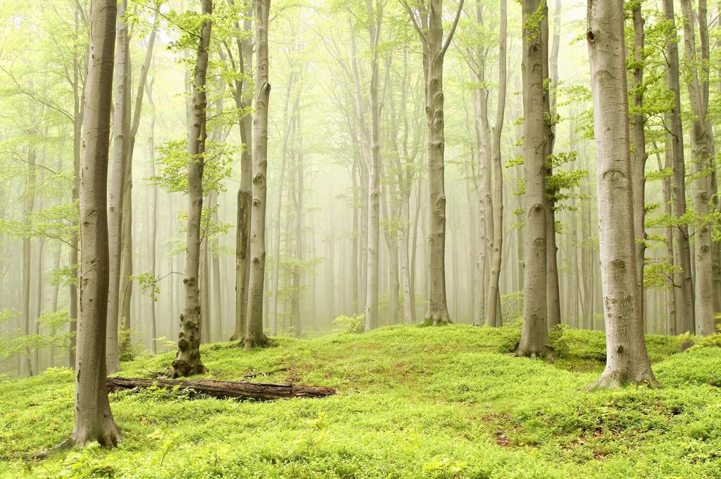 Výsledek obrázku pro spring forest