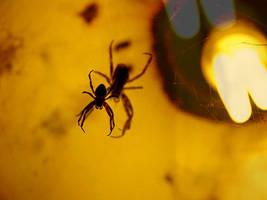 Spider's shadow