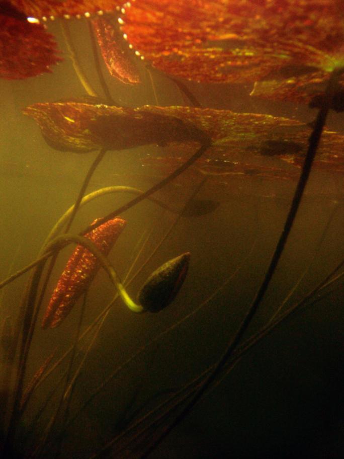 underwater by redtrain66