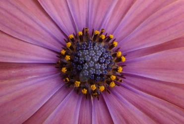 Purple by Juice-04