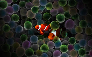 Circus Clown Fish by rebstile