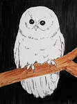 01 Owl by Asaph
