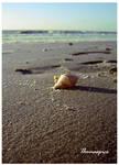 Beach by thomaspics