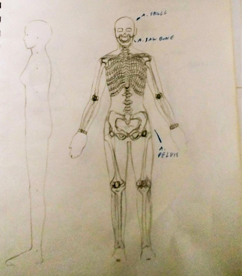 Bio Android Skeletal Anatomy Old Pic By Imperatordavianus On