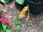 Butterfly House III