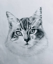 Domestic Short-haired Cat by TheKissingHand