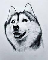 Siberian Husky by TheKissingHand