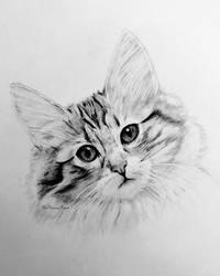 Norwegian Forest Cat Kitten by TheKissingHand