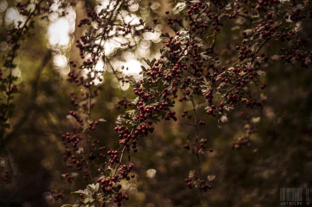 Autumn light by MathildeHPhotography