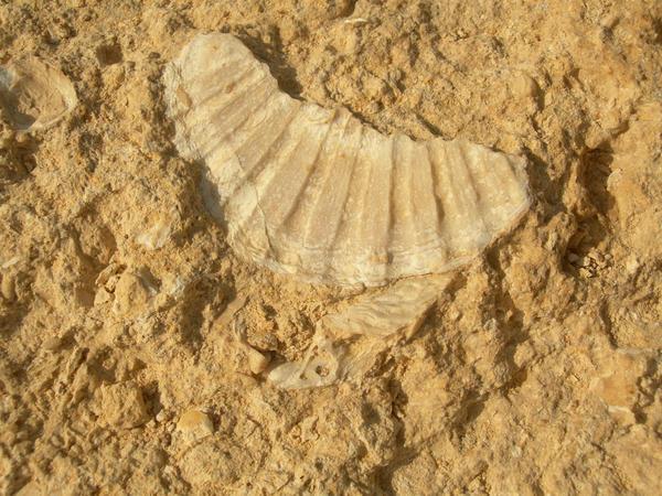 Fosil en piedra by pantherofpuppetz
