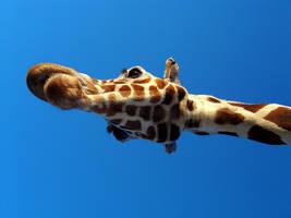Giraffe by mrdectol