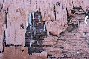 Rotten Brown Wood by GrungeTextures