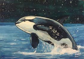 Corky 2, Breaching to the Stars by Aleksi-Ann