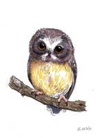 Owl sketch by Alliot-art