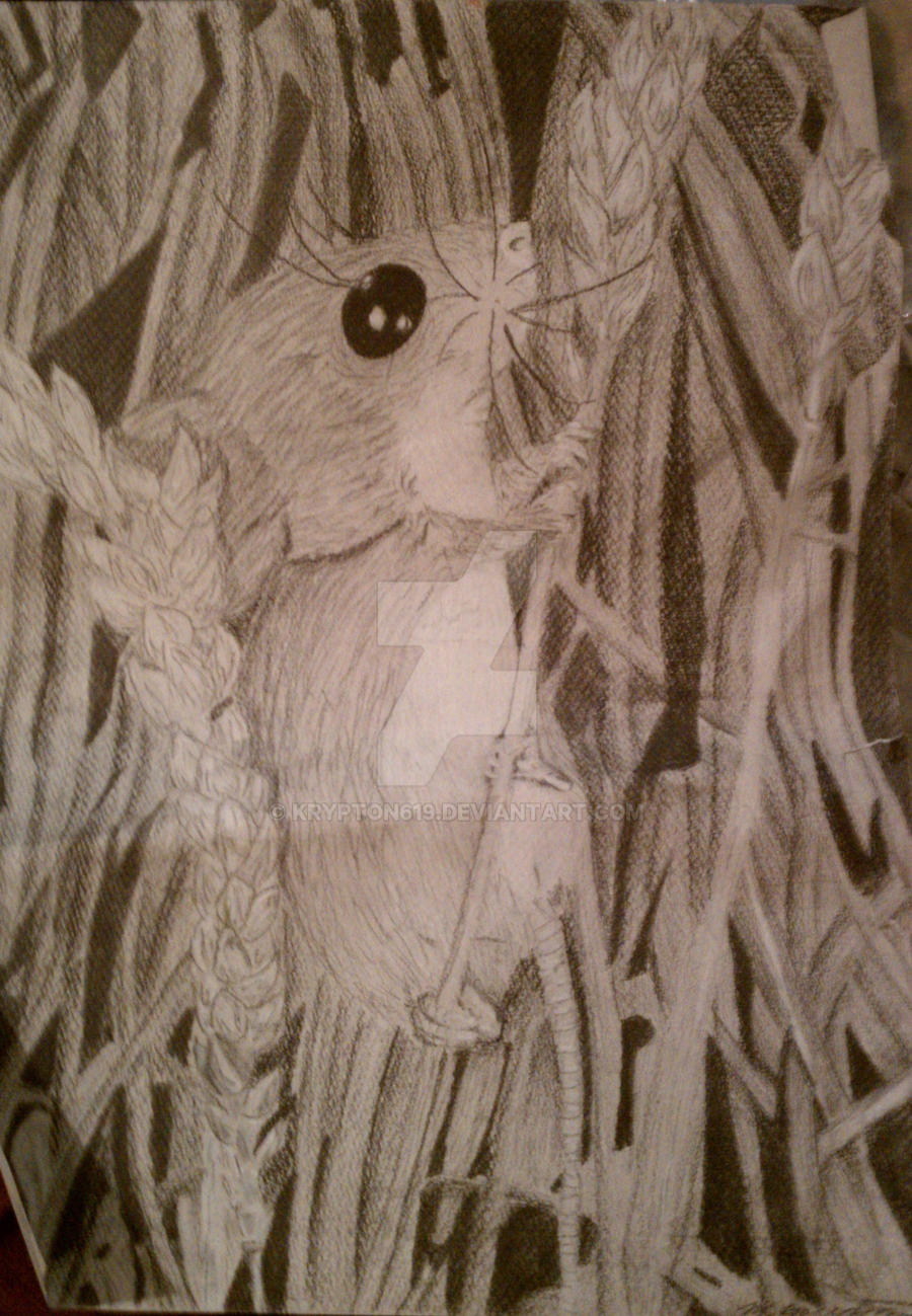 field mouse by krypton619