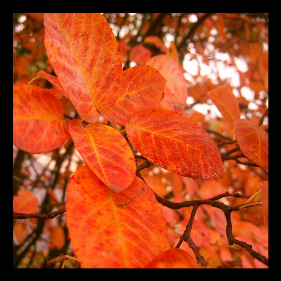 autumn feelings by sth22art