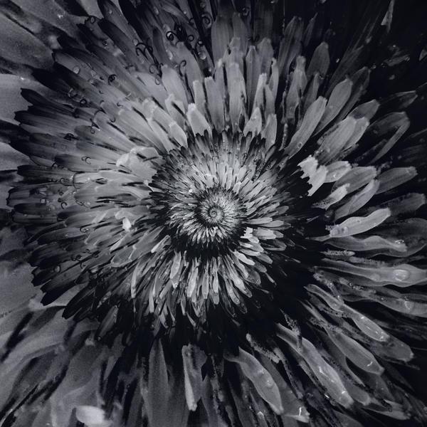 spiralling VI (Premium Content) by sth22art