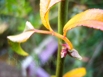Yellowed Leaves by LadyAlias