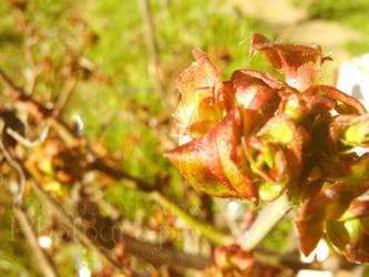 Warm Spring Leaves by LadyAlias