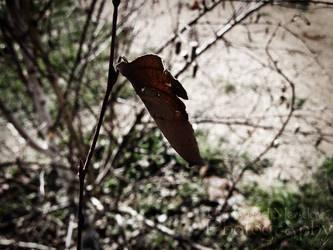 Autumn Shrub by LadyAlias