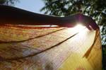 Solar Deity