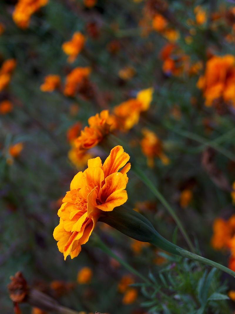 Flowers of Fire by Alexandru1988