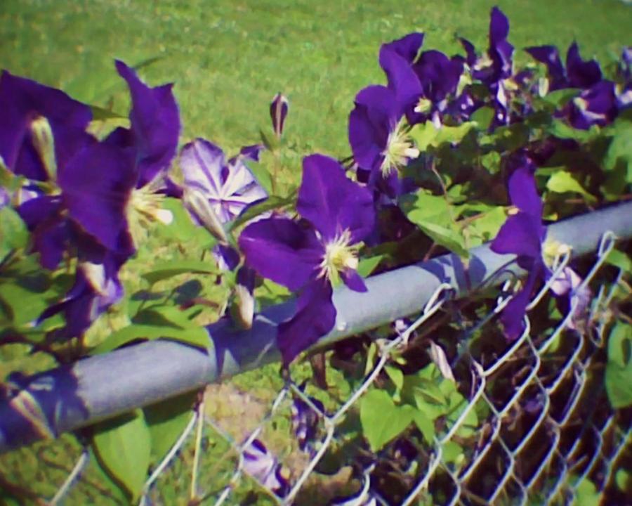 Take a walk through the garden please by stephypandabear - When you walk through the garden ...