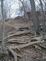 Root Stairs I by KiwiRose-Stock