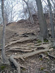 Root Stairs I