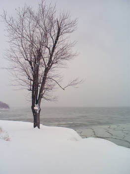 Frozen Lake and Tree