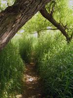 Criss-cross Path by KiwiRose-Stock