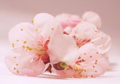 Flori de corcodus 2 by DemonKourai