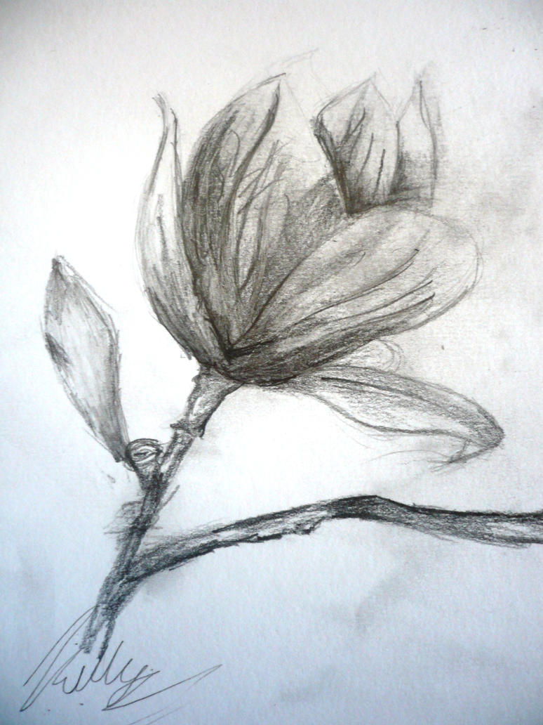 Quick Flower Sketch By Ikelly77 On DeviantArt
